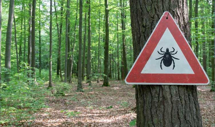 Tick Insect Warning Sign Forest Gulf Coast Tick Illinois Tennessee