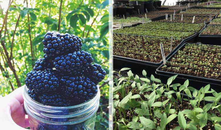 Berry Season Begins and U-Pick Visits Return as Covid-19 Restrictions Lift