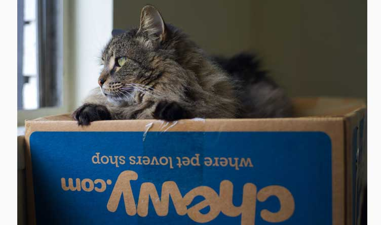Cat on Chewy.com Box