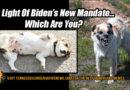 In Light Of Biden's New Mandate... Which Are You? Vaccine Mandate Meme
